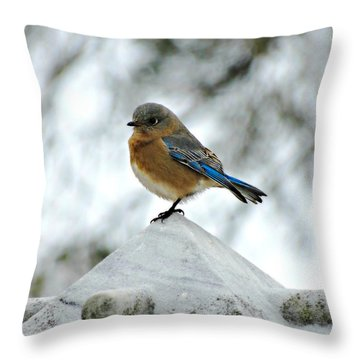 Bluebird 3 Throw Pillow