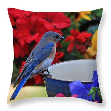 Bluebird Breakfast Throw Pillow
