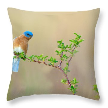 Bluebird Breeze Throw Pillow