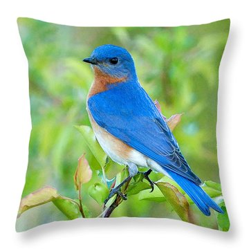 Bluebird Joy Throw Pillow