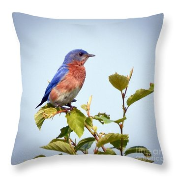 Throw Pillow featuring the photograph Bluebird On Top by Kerri Farley