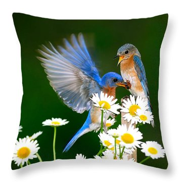 Bluebirds And Daisies Throw Pillow