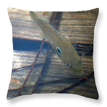 Bluegill On The Hunt Throw Pillow by Kim Pate