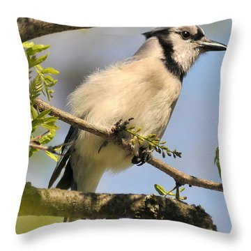 Bluejay 310 Throw Pillow