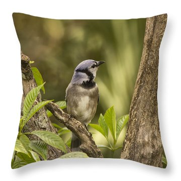 Throw Pillow featuring the photograph Bluejay In Fork Of Tree by Anne Rodkin