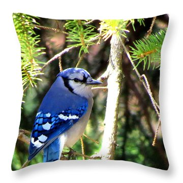 Bluejay Throw Pillow by Stephen Melcher