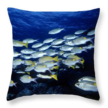 Bluelined Snappers And Yellowspot Emperors Throw Pillow