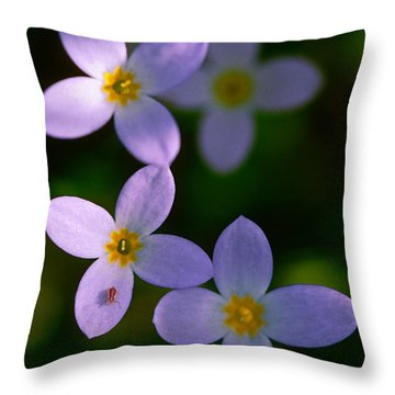 Throw Pillow featuring the photograph Bluets With Aphid by Marty Saccone