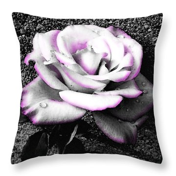 Throw Pillow featuring the photograph Blushing White Rose by Shawna Rowe