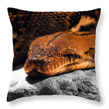 Boa Constrictor Throw Pillow by Jai Johnson