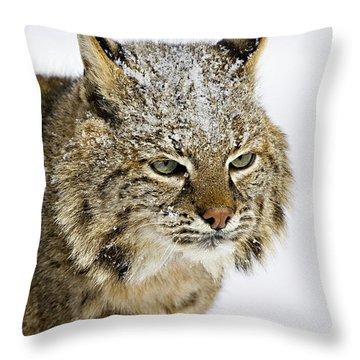 Bob Throw Pillow by Jack Milchanowski