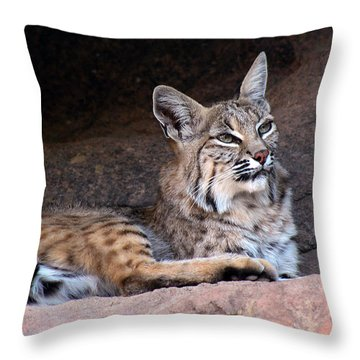 Throw Pillow featuring the photograph Hmm What To Do by Elaine Malott