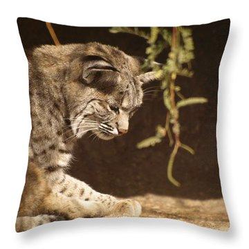 Bobcat Throw Pillow by James Peterson