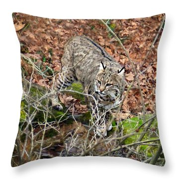 Bobcat Throw Pillow by William Tanneberger