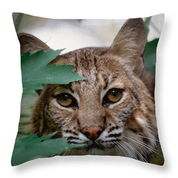 Bobcat With Maple Leaves Throw Pillow