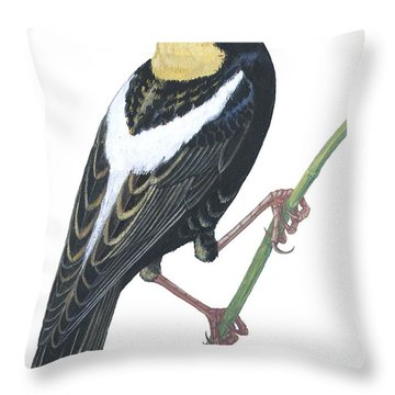 Bobolink Throw Pillow by Anonymous