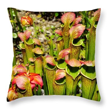 Bog Garden 2 Throw Pillow by Davina Washington