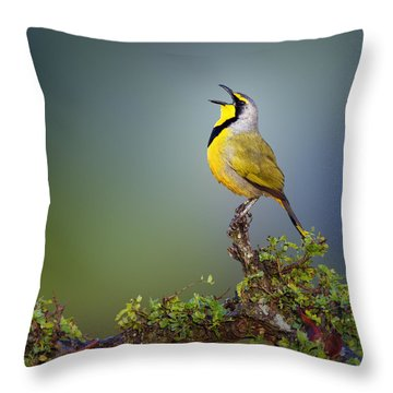 Bokmakierie Bird - Telophorus Zeylonus Throw Pillow