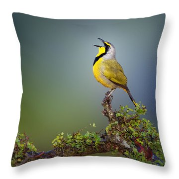 Bokmakierie Bird - Telophorus Zeylonus Throw Pillow by Johan Swanepoel