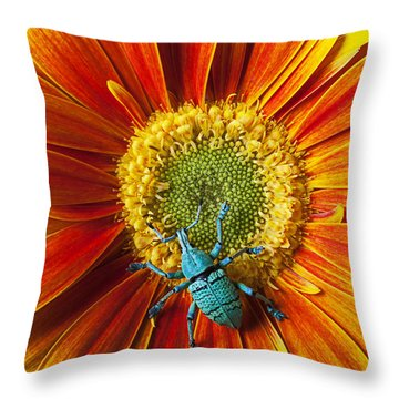 Boll Weevil On Mum Throw Pillow by Garry Gay
