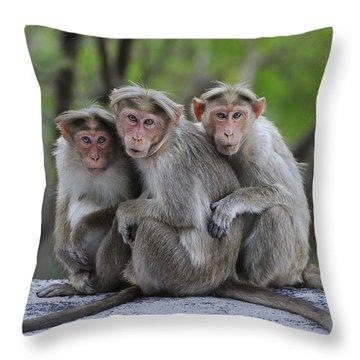 Bonnet Macaque Trio Huddling India Throw Pillow