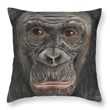 Throw Pillow featuring the painting Bonobo Face - Pygmy Chimpanzee - Pan Paniscus - Fine Art Print - Stock Illustration - Stock Image by Urft Valley Art