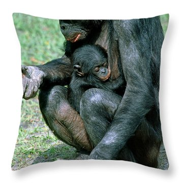 Bonobo Pan Paniscus Nursing Throw Pillow by Millard H. Sharp