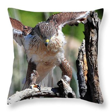 Throw Pillow featuring the photograph Born To Be Free by Barbara Manis