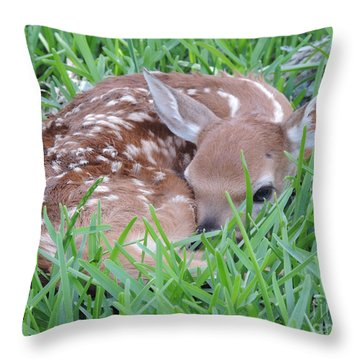 Throw Pillow featuring the photograph Born Today by Jimmie Bartlett