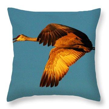 Bosque Del Apache Sandhill Crane Golden Light Throw Pillow by Bob Christopher