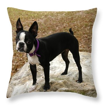 Throw Pillow featuring the photograph Boston Terrier On The Rock by Donald Williams