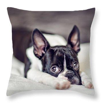 Boston Terrier Puppy Throw Pillow