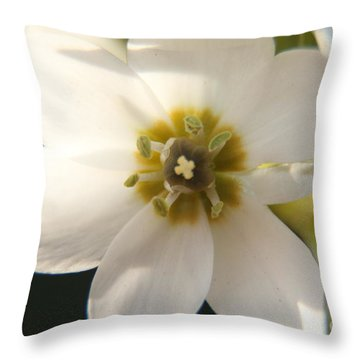 Throw Pillow featuring the photograph Botanical Purity by Taschja Hattingh