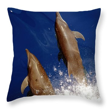 Bottlenose Dolphins Tursiops Truncatus Throw Pillow by Anonymous
