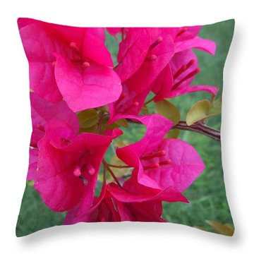 Bougainvillea Dream #2 Throw Pillow