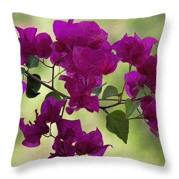 Bougainvillea Throw Pillow by Fred Larson