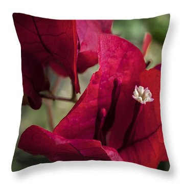 Throw Pillow featuring the photograph Bougainvillea by Steven Sparks