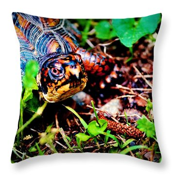 Box Turtle Throw Pillow by Tara Potts