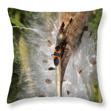 Boxelder On Butterfly Milkweed 2 Throw Pillow