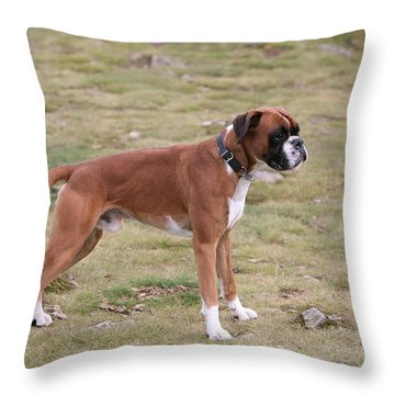 Boxer Dog Throw Pillow by Mark Severn