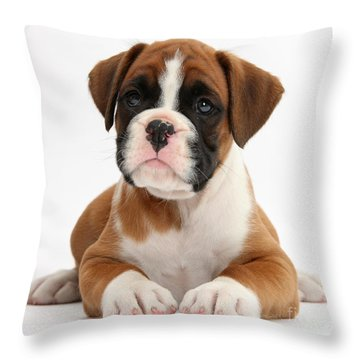 Boxer Puppy Throw Pillow by Mark Taylor