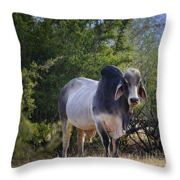 Brahma Cow Throw Pillow