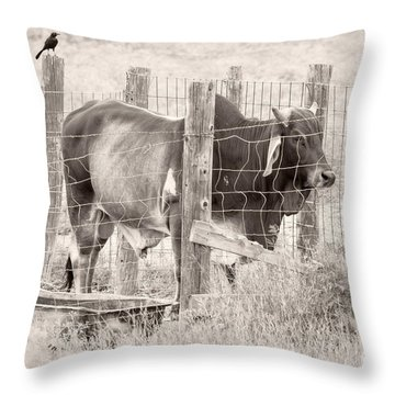 Brahman Bull Throw Pillow