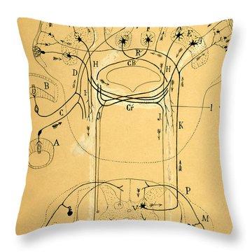 Brain Vestibular Sensor Connections By Cajal 1899 Throw Pillow