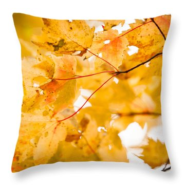 Branching Yellow Throw Pillow by Melinda Ledsome
