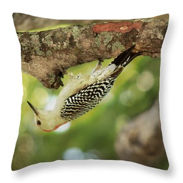 Throw Pillow featuring the photograph Breakfast Time by Greg Allore
