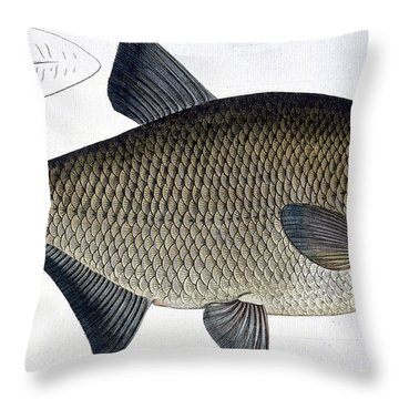 Bream Throw Pillow by Andreas Ludwig Kruger