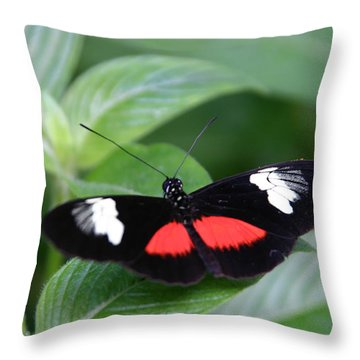 Breathtaking Contrast Throw Pillow