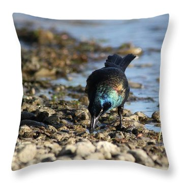 Brewer's Blackbird Throw Pillow by Ramabhadran Thirupattur