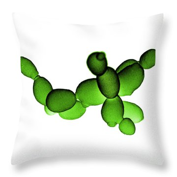 Brewers Yeast Sem Throw Pillow by David M. Phillips